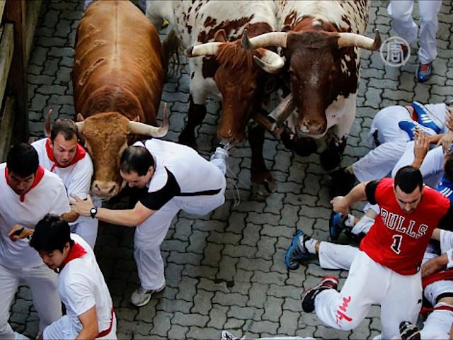 Забег с быками: 50 человек госпитализировано