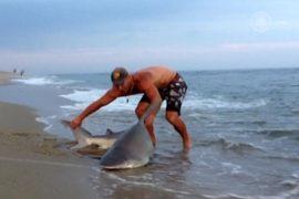 Американец руками вытащил акулу на берег