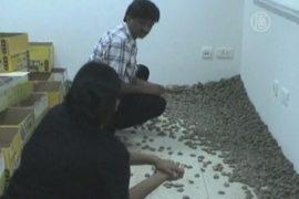 Находка таможенников: 10 тысяч черепах в чемодане