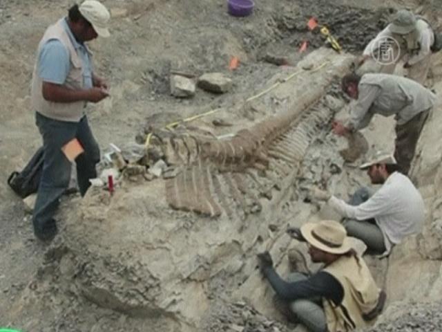 В Мексике нашли сохранившийся хвост динозавра