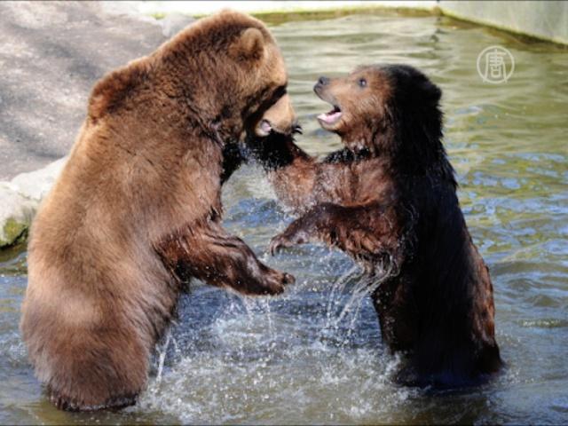 В зоопарках Китая животных спасают от жары
