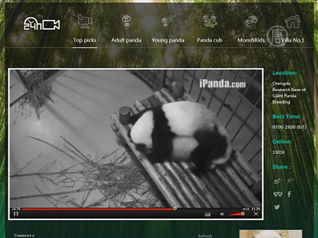 Теперь можно наблюдать за пандами онлайн