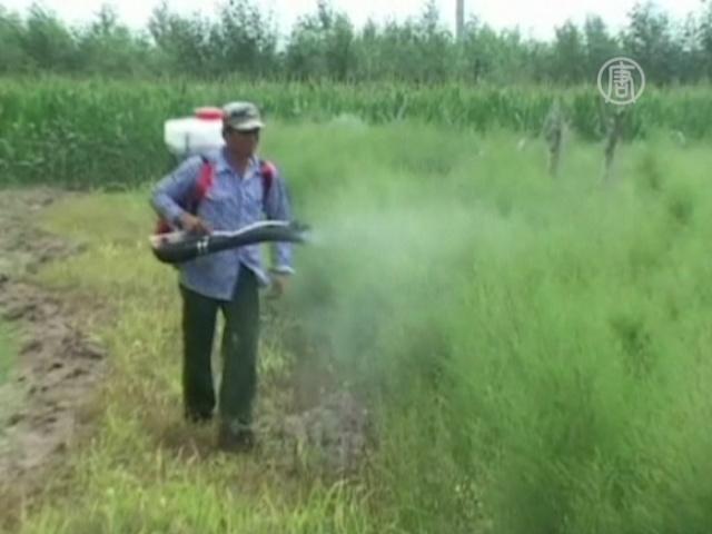 Град и саранча губят урожай в Китае