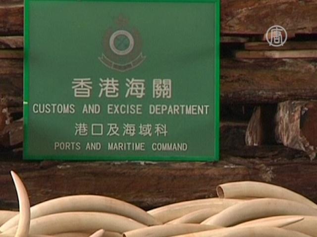 Бивни, рога и шкуры на $5,3 млн изъяты в Гонконге