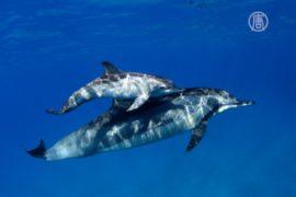 Как рождаются дельфины?