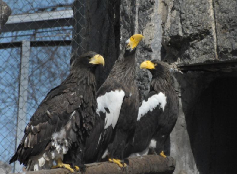 Редкие виды птиц сохраняют в Москве