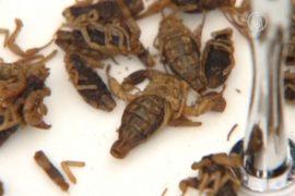 Лондонцев бесплатно накормили насекомыми