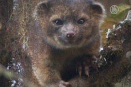 Зоологи США выявили новое млекопитающее