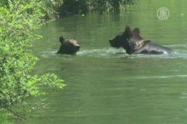 Животных пекинского зоопарка спасают от жары