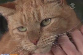 Собачья кровь спасла жизнь коту