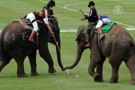 В Таиланде выбирают чемпиона по поло на слонах