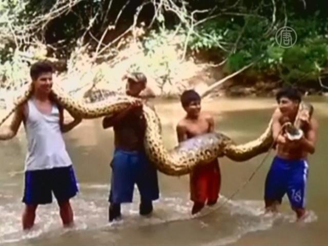В Перу поймали 5-метровую анаконду