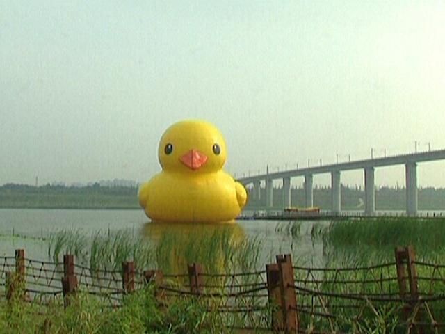 Гигантский утенок добрался и до Пекина