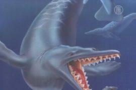 В Перу нашли скелет примитивного китообразного