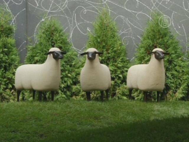 Автозаправку в центре Нью-Йорка оккупировали овцы