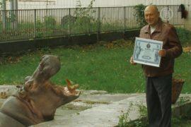 Самый старый бегемот живет в Киеве