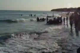 В Бразилии на берег выбросились 30 китов