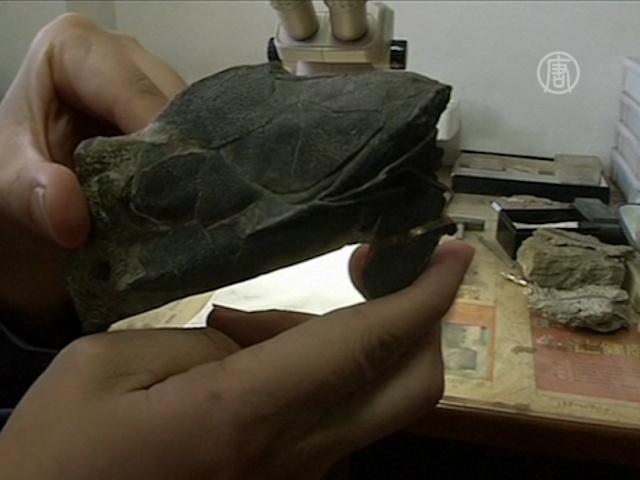 В Китае нашли древнейшую рыбу с челюстями