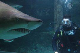 Дайвер побывал в зубах акулы во второй раз
