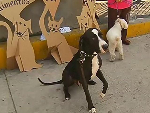 Собаки вышли, чтобы защитить право на еду