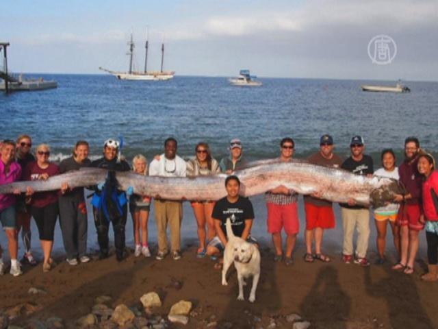 Огромную «морскую змею» выловили в Калифорнии
