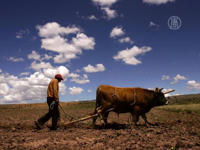 Фермеры Боливии жалуются на потепление климата