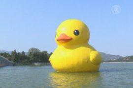 Огромная жёлтая утка покидает Пекин