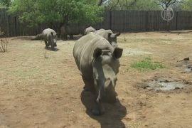 В ЮАР открылся первый детский дом для носорогов