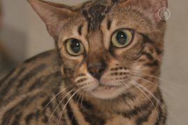 Гигантских кошек показали в Киеве