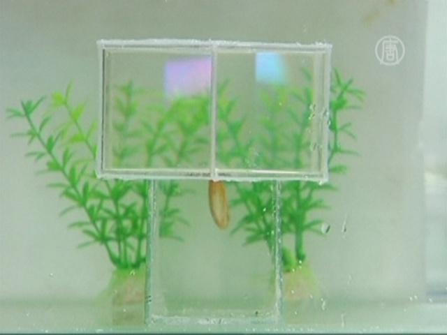 В Китае разработали «цилиндр-невидимку»