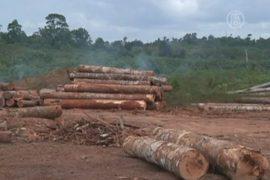 Амазонская сельва сократилась почти на 30%