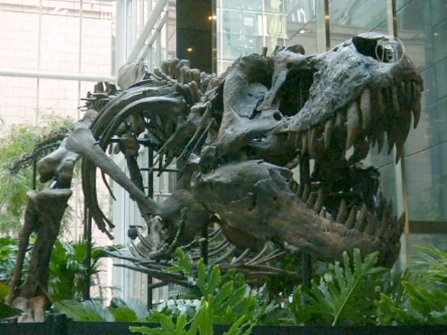 Лот «Битва динозавров» уйдёт с молотка в Нью-Йорке