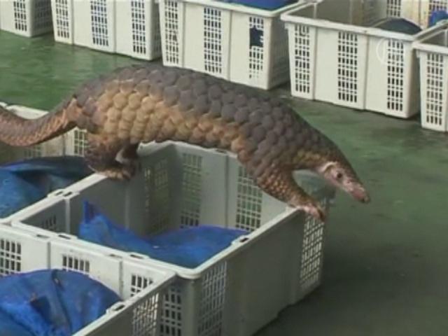 Таможенники изъяли 122 огромных ящера