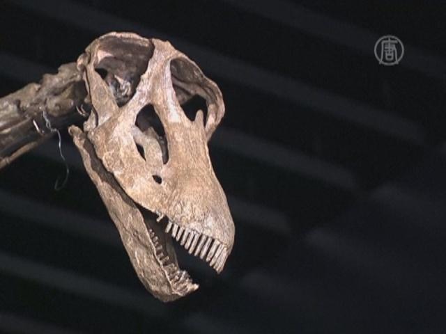 17-метровый скелет динозавра уйдет с молотка