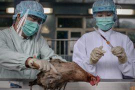 В Гонконге выявлен первый случай заражения H7N9