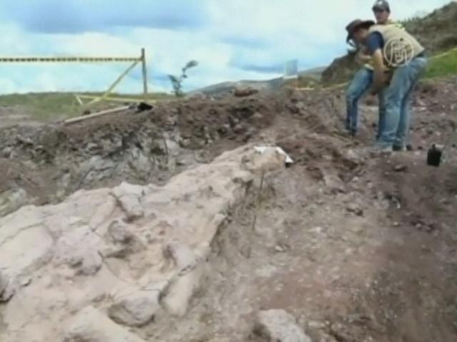 Останки 8-метрового плезиозавра нашли в Колумбии