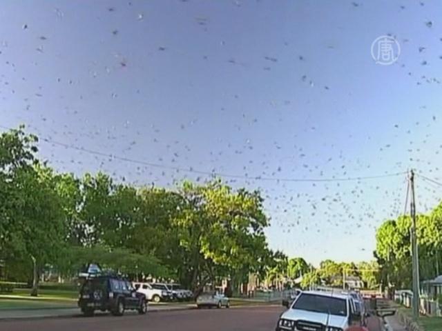 Город в Австралии борется с «тучами» летучих мышей