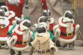 Рождественские пингвины по-сеульски радуют детей