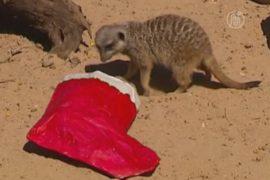 Животным в зоопарке Сиднея устроили Рождество