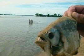 В Аргентине рыбы искусали отдыхающих