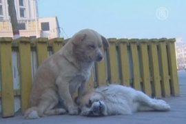 Собака оплакивает погибшего друга