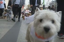 Около 600 собак пробежались по Мадриду