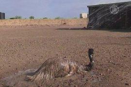 2013 год для Австралии стал самым жарким