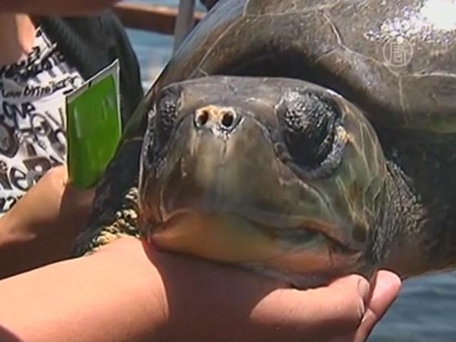 Чилийские рыбаки спасли огромную черепаху