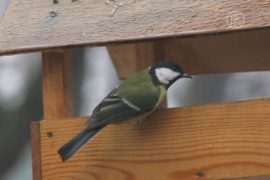 Как подкормить птиц зимой?