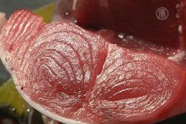 Аукцион: тунца продали за 70 тысяч долларов