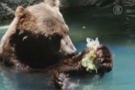Рио: животных охлаждают мороженым