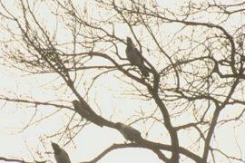 Из-за теплой зимы птицы в Польше не улетели на юг