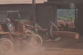 На войну с лесопилками вышли бразильские экологи