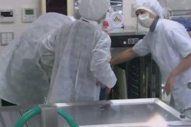 Школы в Японии закрыли на карантин из-за вируса